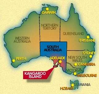 kangaroo insel
