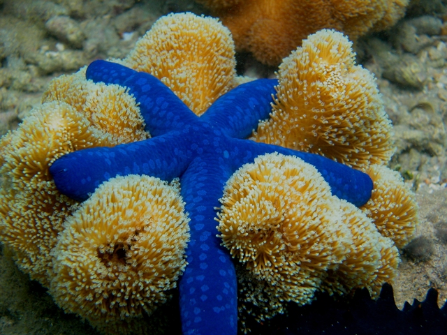 blue-starfish.jpg
